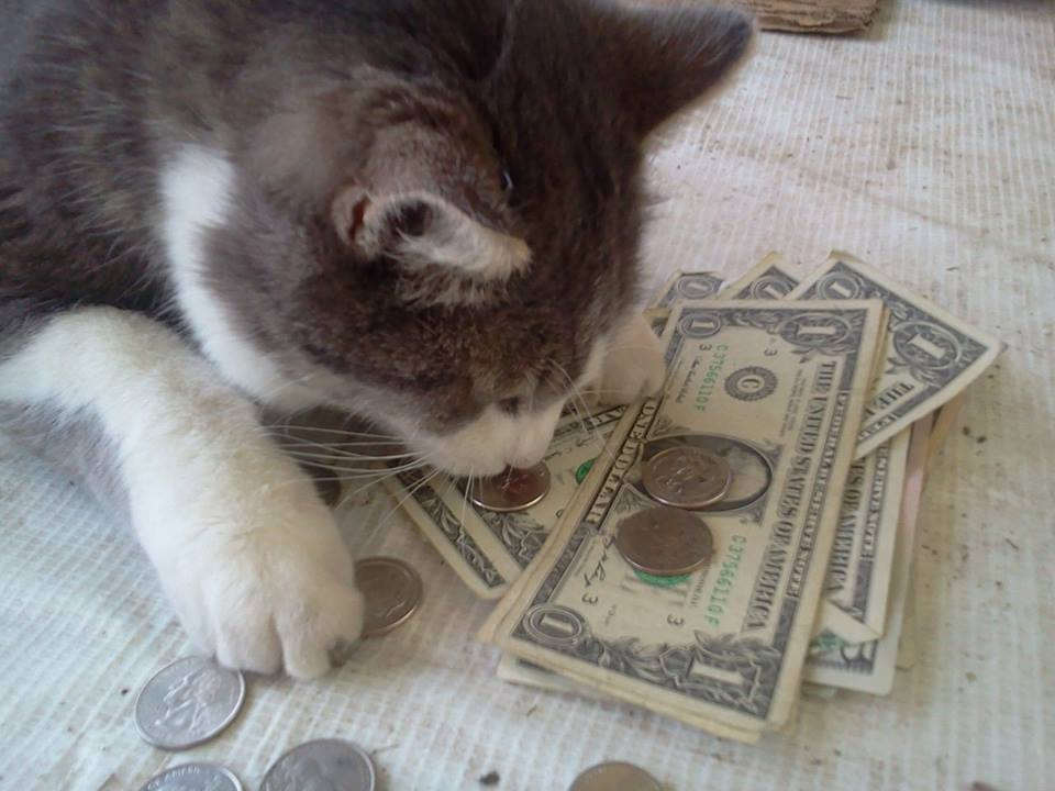 First Jasper smells the money.