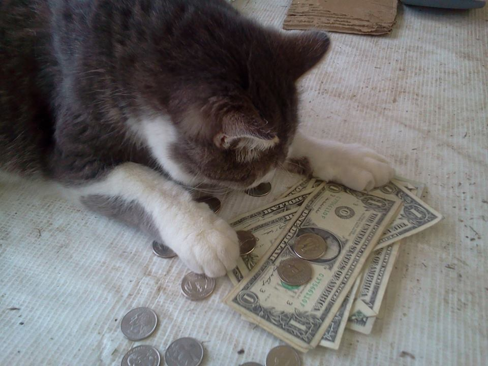 Then Jasper starts counting the money.