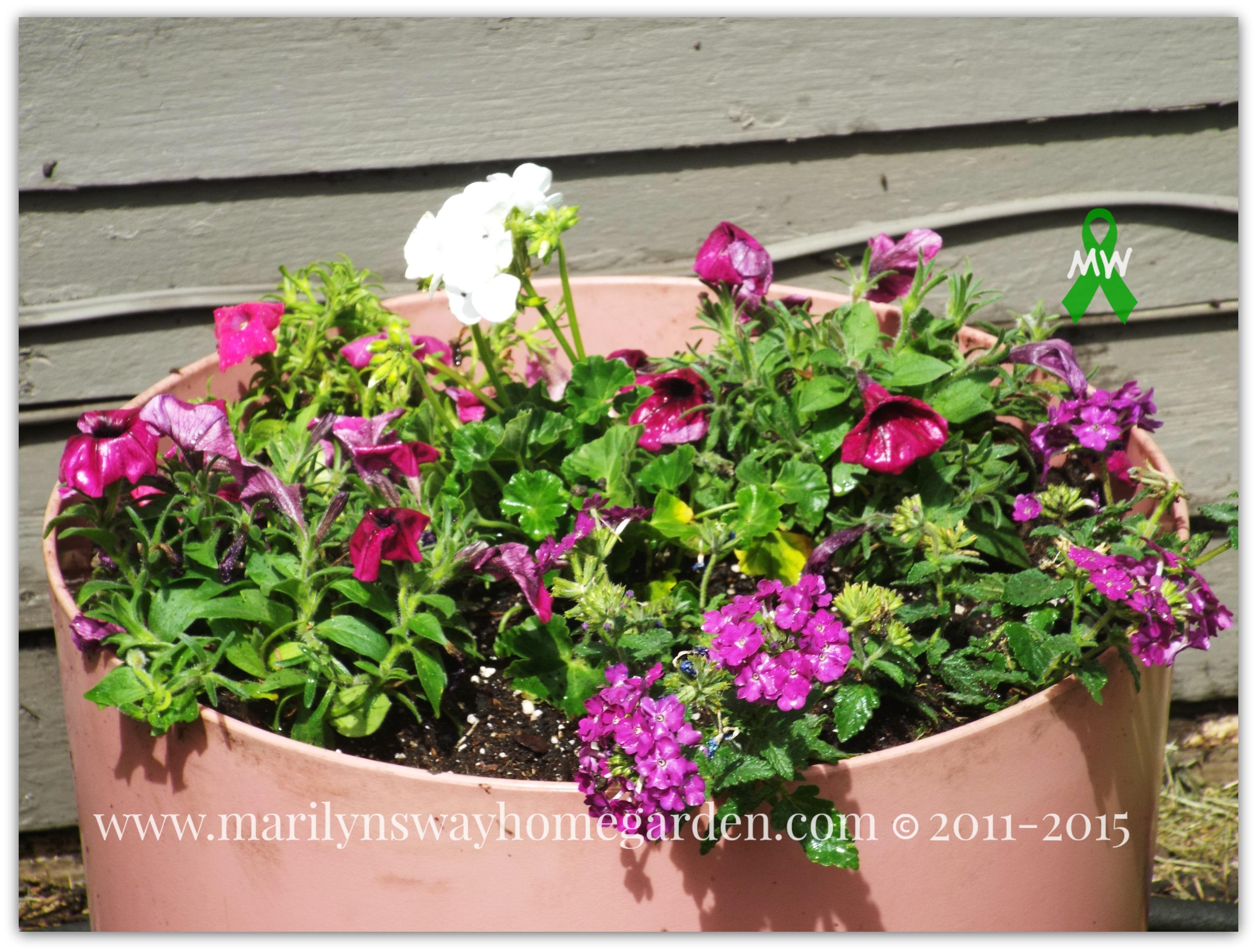 9 filler ideas for large planters marilyn 39 s way for Good filler plants for landscaping