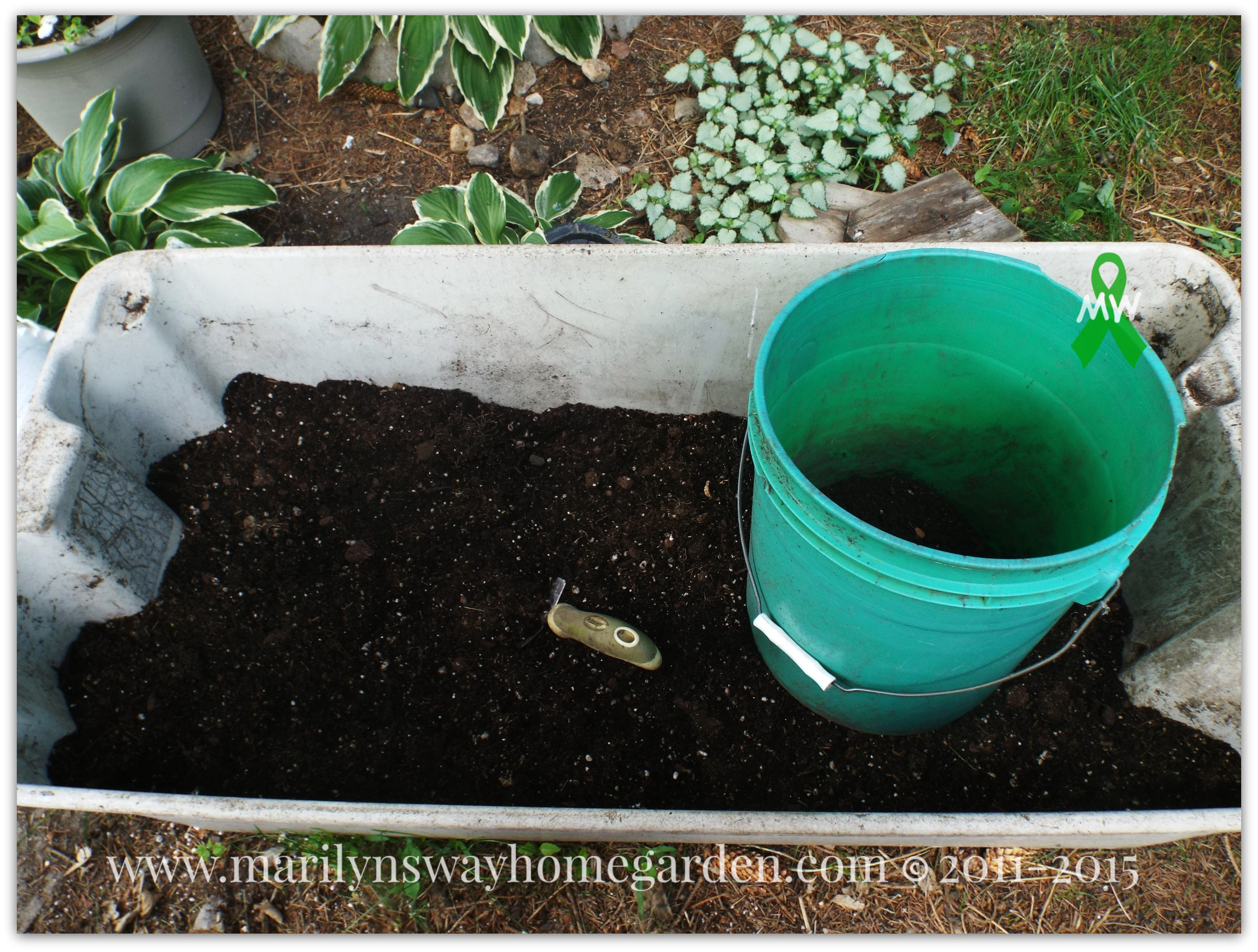 Fill a bucket full of amended potting soil.