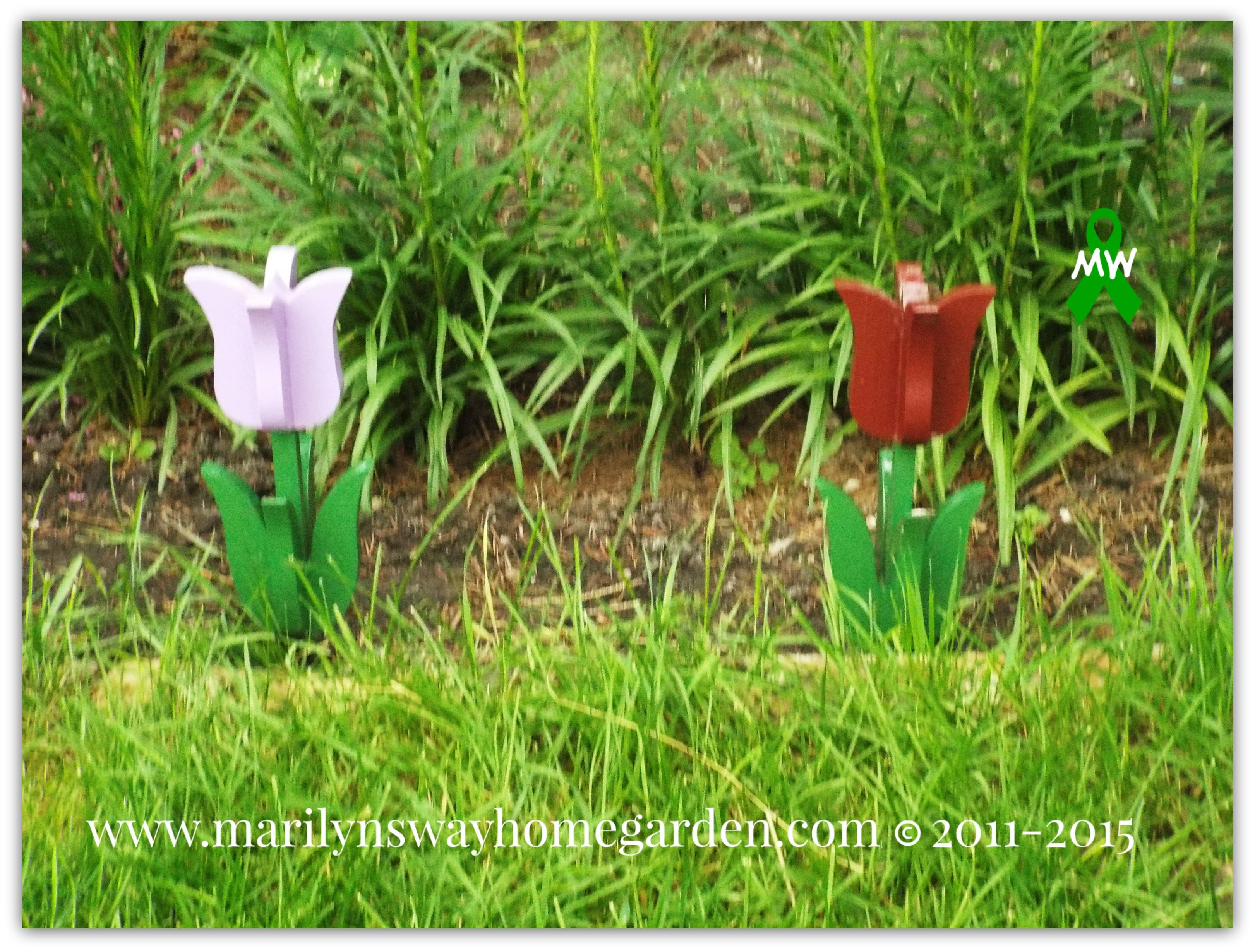 Pretty Tulips!